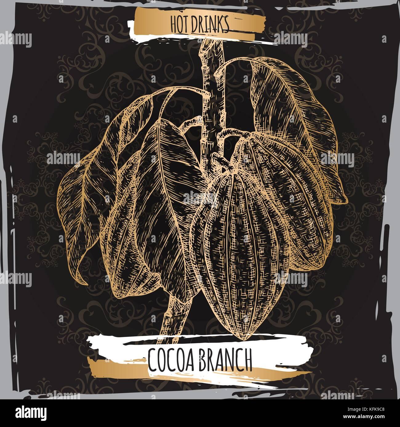 Kakaobaum aka Theobroma cacao Zweig Skizze mit Blättern und Bohnen ...