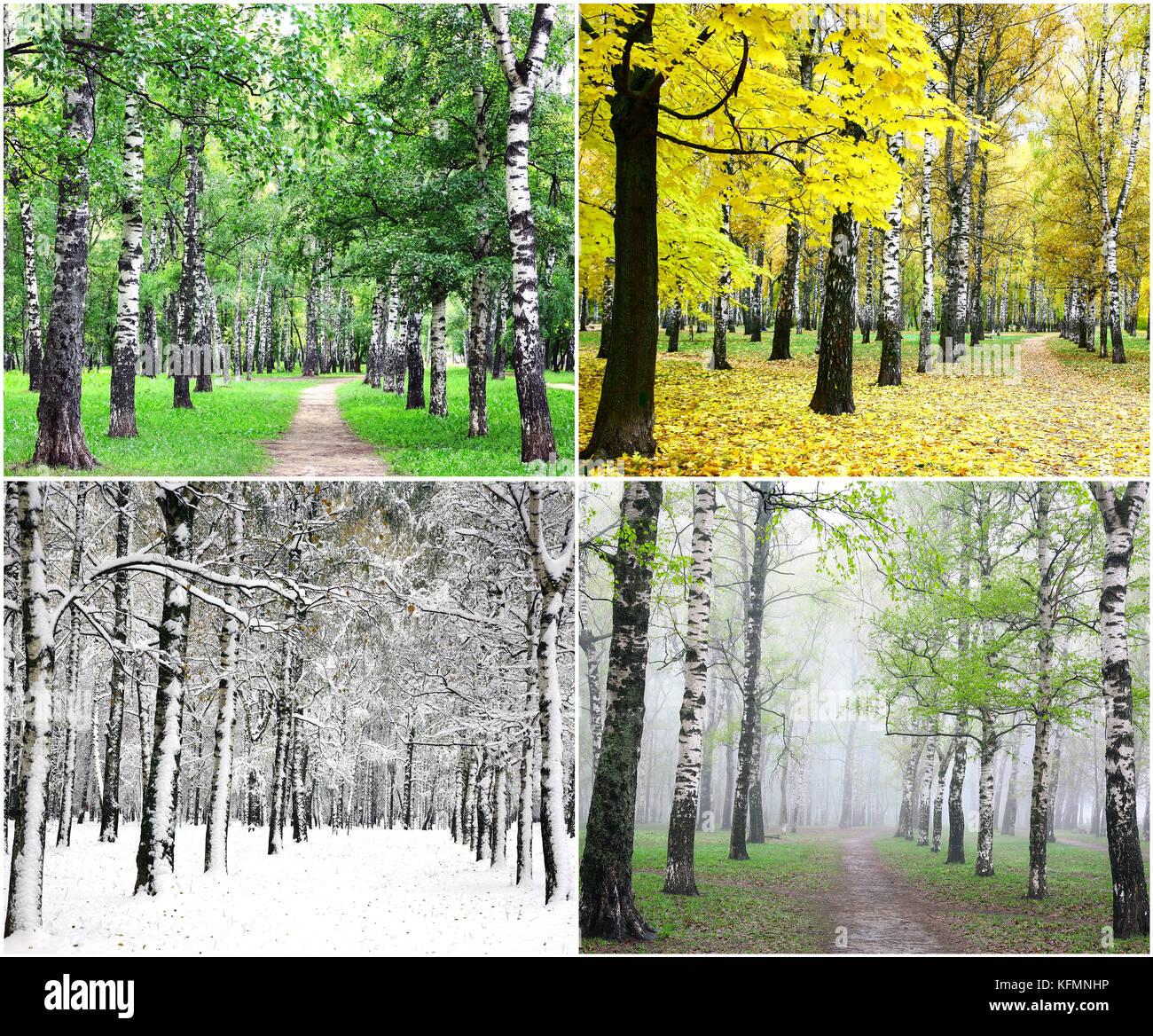 5ffb912f05eb71 Vier Jahreszeiten der Zeile Birken - Sommer