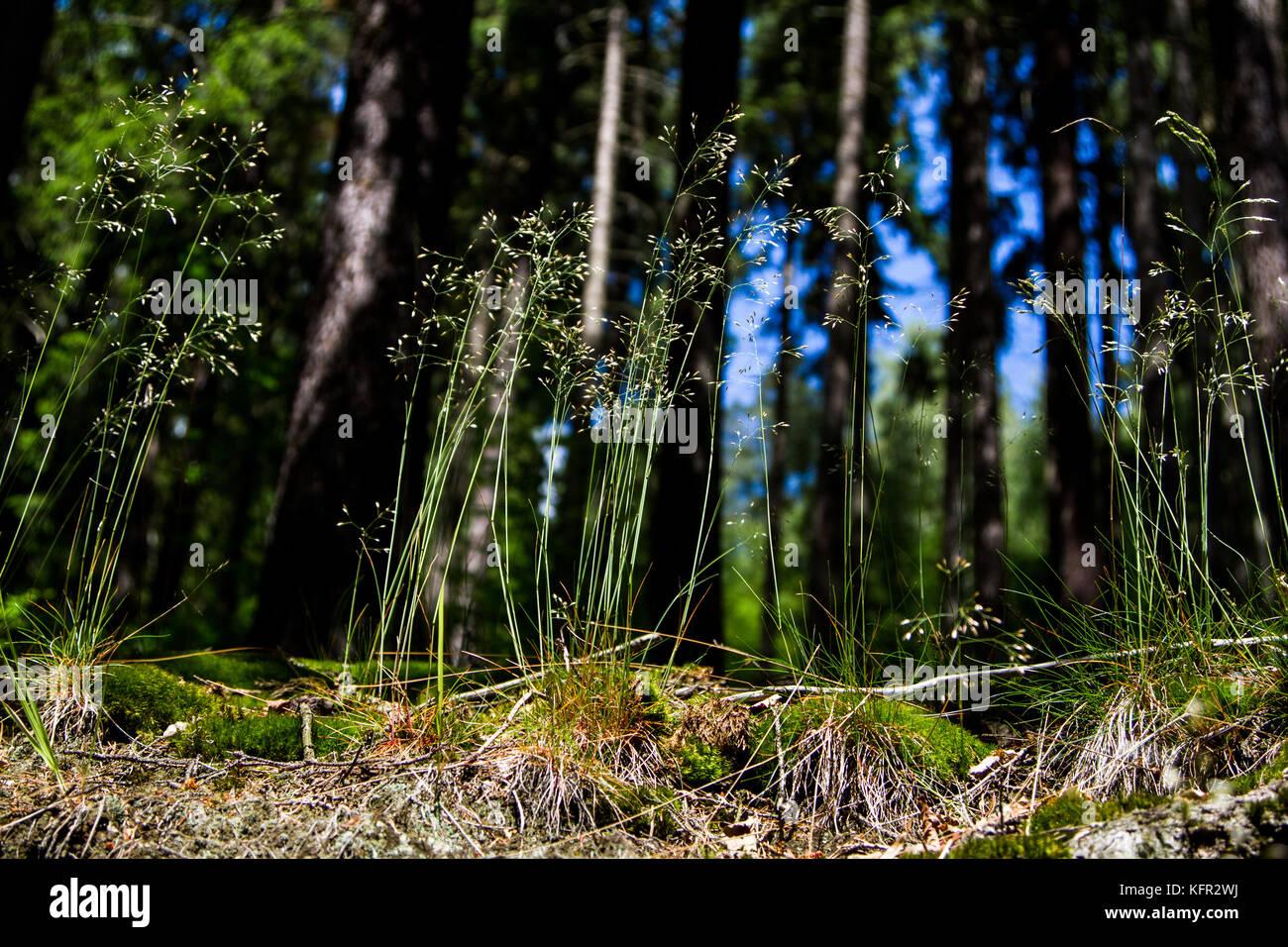 Der Frosch Stockfotos & Der Frosch Bilder - Alamy