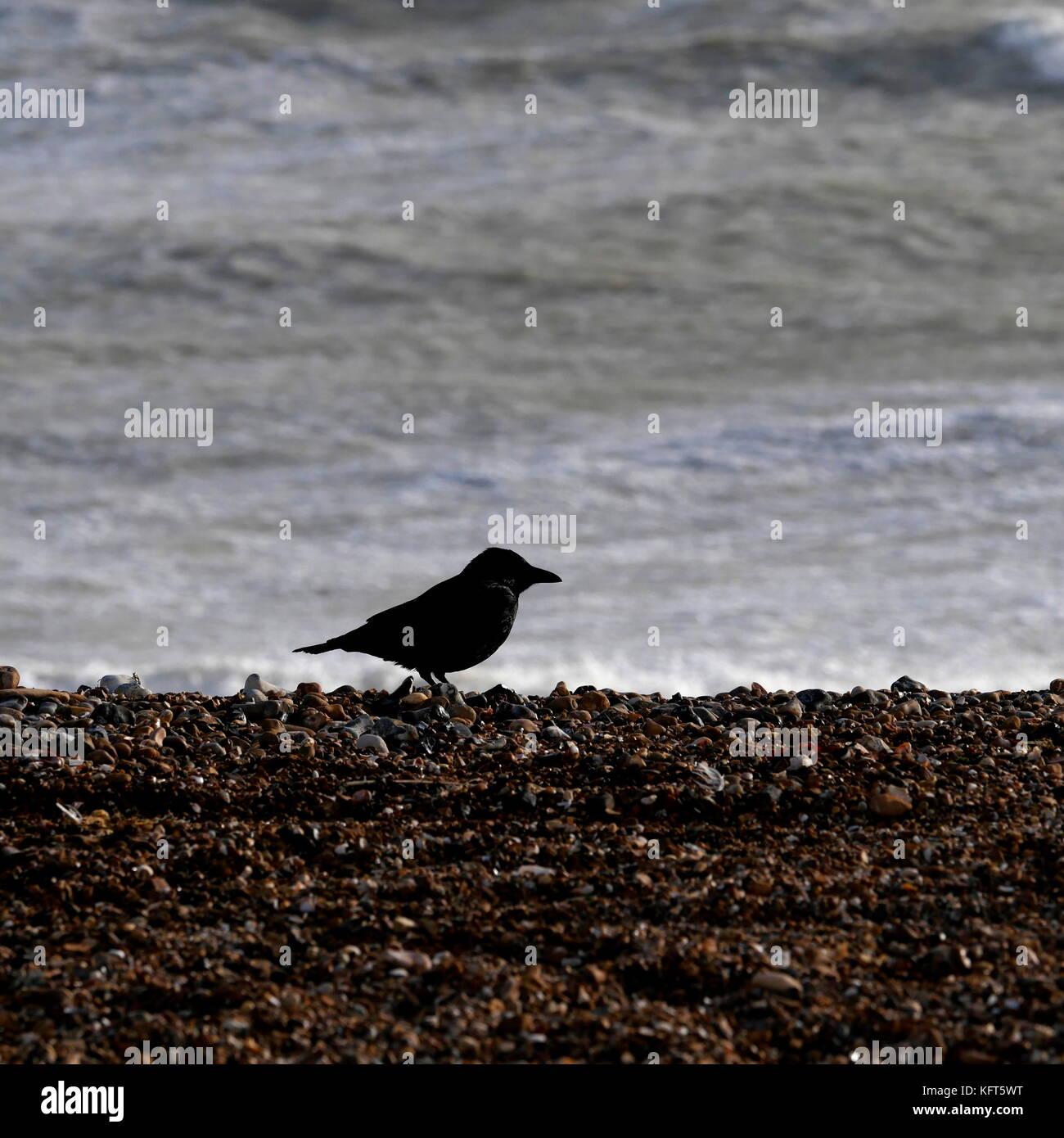 AJAXNETPHOTO. Oktober, 2017. WORTHING, England. - Strand Vogel. - Eine schwarze Krähe BRAVES starke Winde AM STRAND Stockfoto