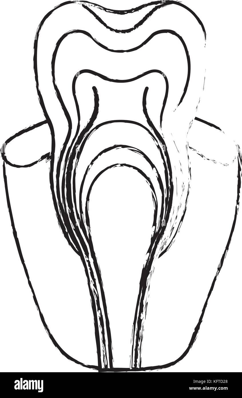Erfreut Zahnanatomie Bilder Fotos - Anatomie Ideen - finotti.info