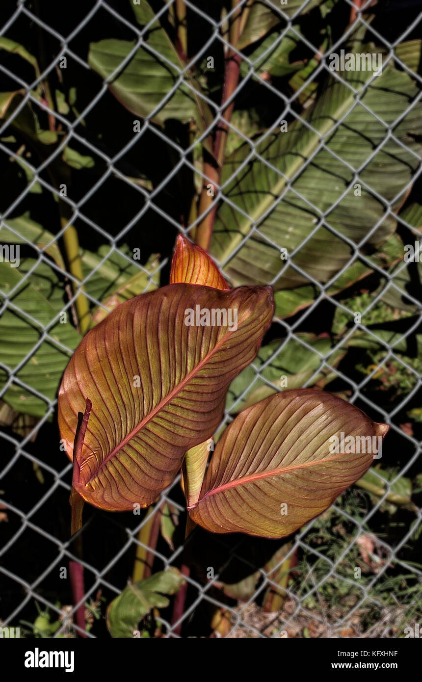 Plant Growing Through Fence Stockfotos & Plant Growing Through Fence ...