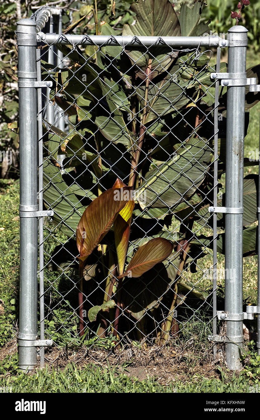 Chain Link Fence Garden Stockfotos & Chain Link Fence Garden Bilder ...