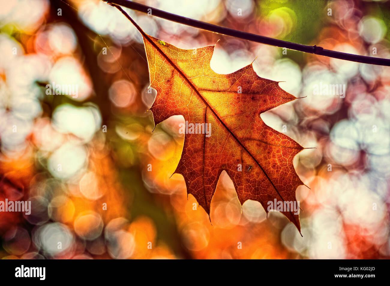 Eine einzelne Herbst Blatt mit einem hervorragenden farbigen Hintergrund Stockfoto