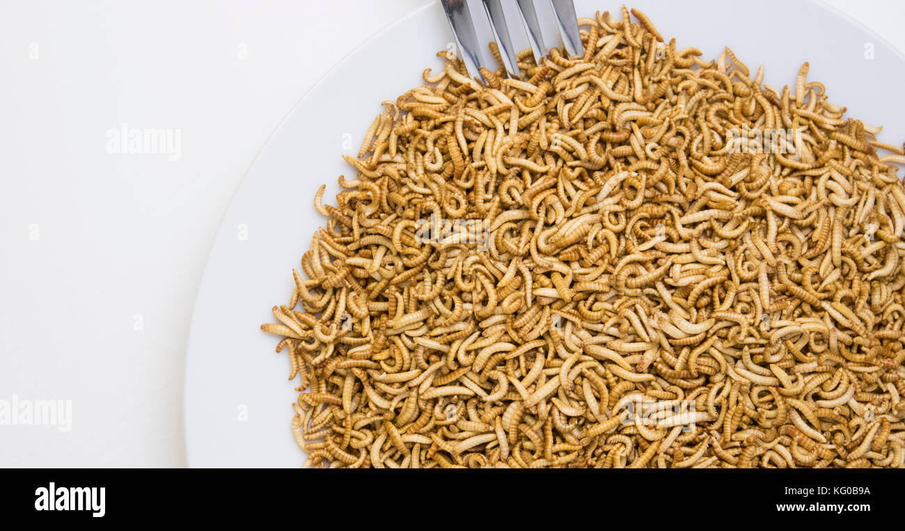 insects food snack stockfotos insects food snack bilder alamy. Black Bedroom Furniture Sets. Home Design Ideas