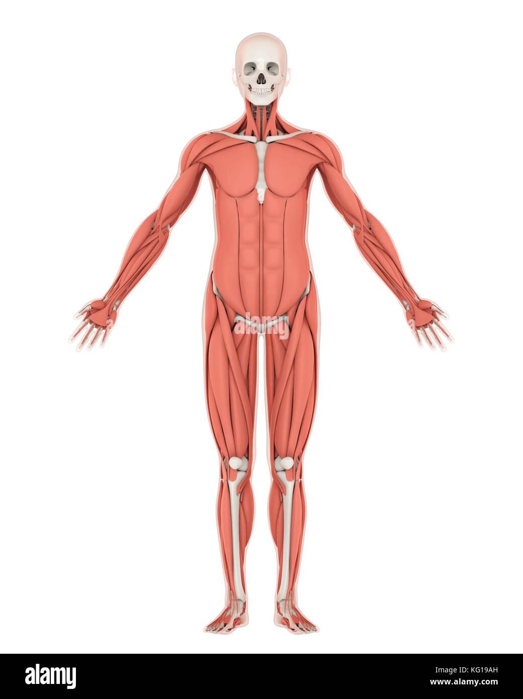 Skeletal Man Stockfotos & Skeletal Man Bilder - Seite 3 - Alamy