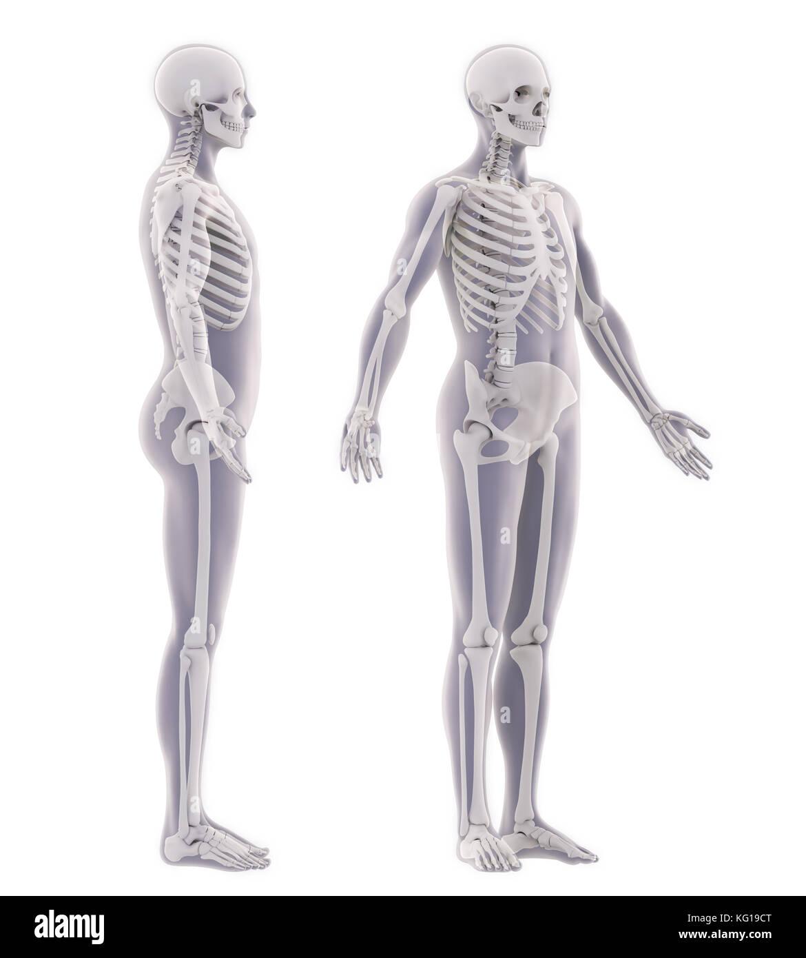 Berühmt Pygmäenziege Anatomie Galerie - Menschliche Anatomie Bilder ...