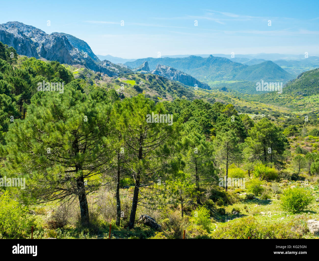 Sierra de Grazalema, Andalusien, Spanien, Europa Stockbild