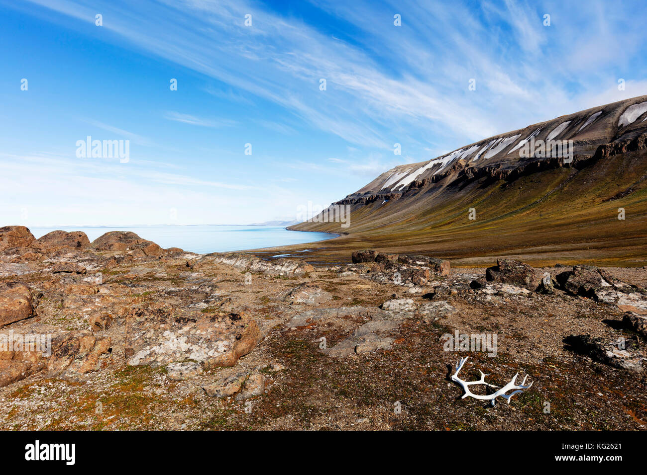 Gehäutet rentier Geweih, kapp Lee, Spitzbergen, Svalbard, Arktis, Norwegen, Europa Stockbild