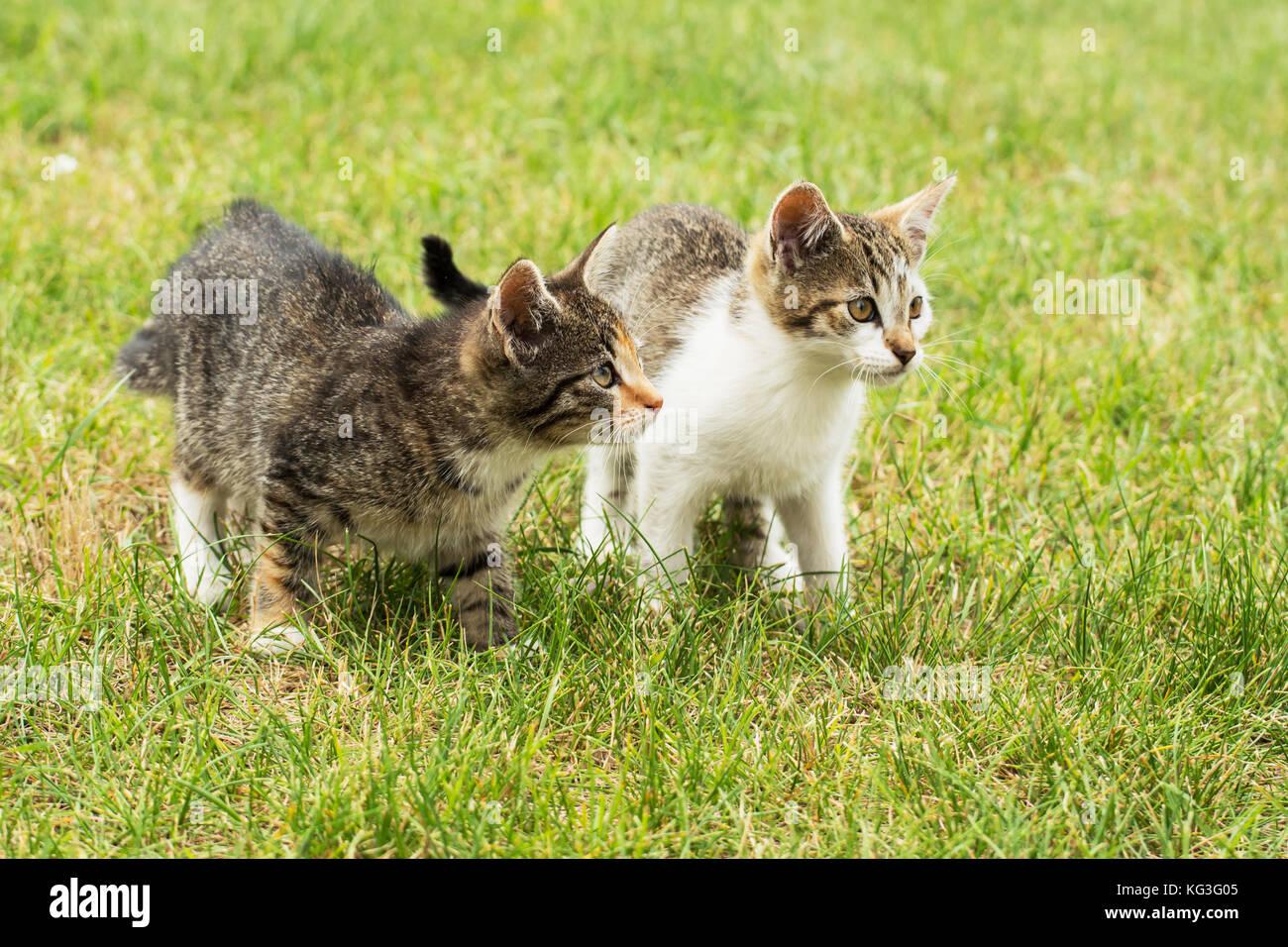 Kittens Tail Stockfotos & Kittens Tail Bilder - Alamy
