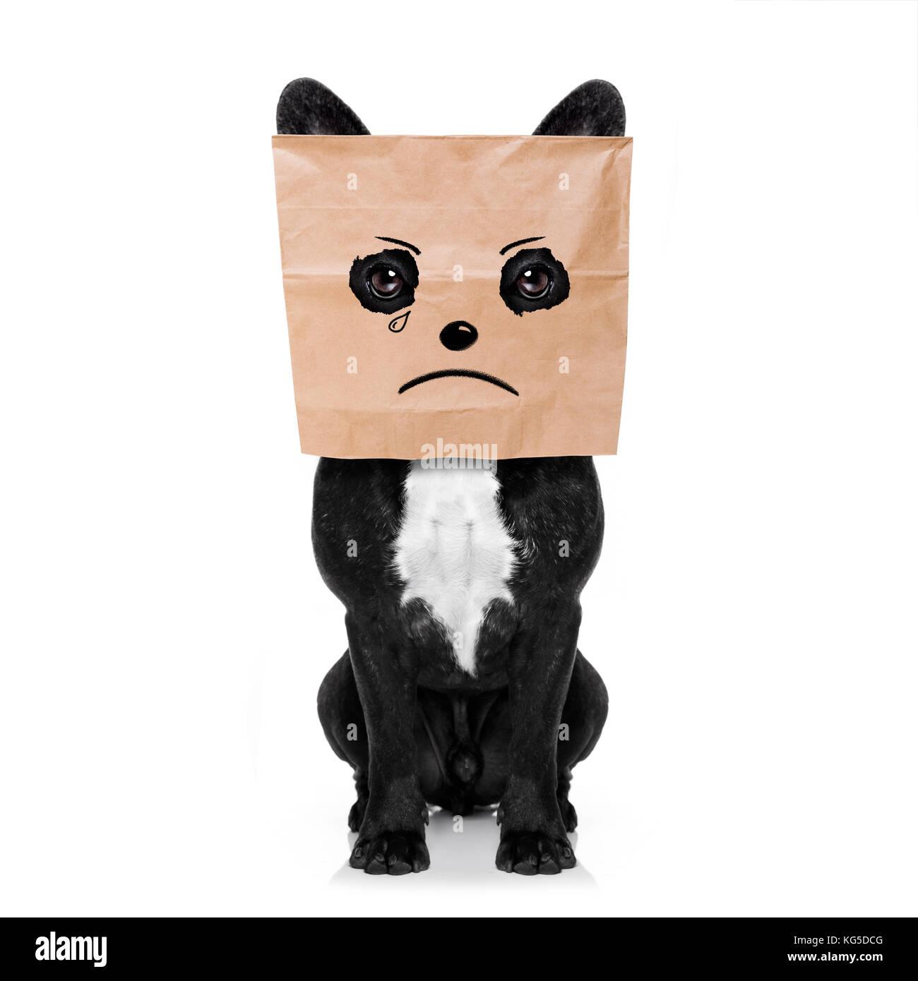 Traurig weinen Französische Bulldogge, versteckt hinter einer Papiertüte auf dem Kopf, auf weißem Stockbild