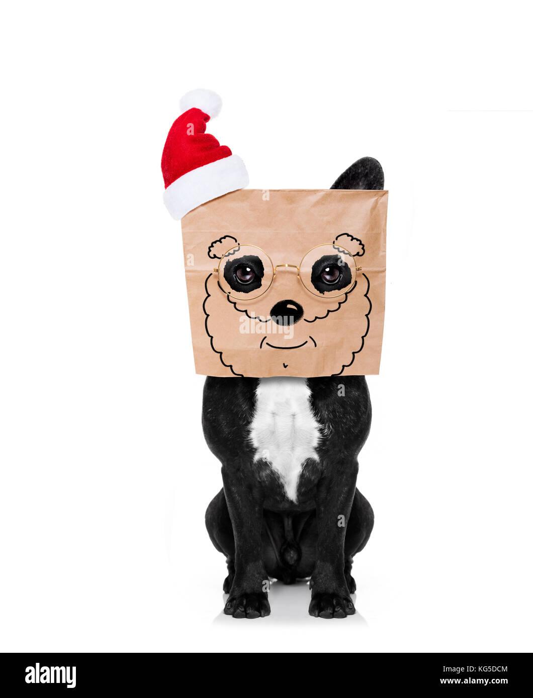 Santa claus Hund, versteckt hinter einer Papiertüte auf dem Kopf, auf weißem Hintergrund, auf Weihnachten, Stockbild