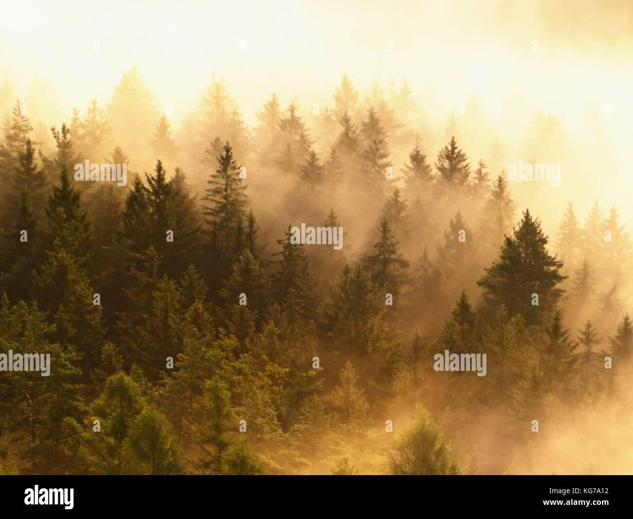 Bunte Nebel abgestreift. Sommer Wald nach schweren regnerischen Nacht. baumkronen stieg von Nebel und stripping Stockbild