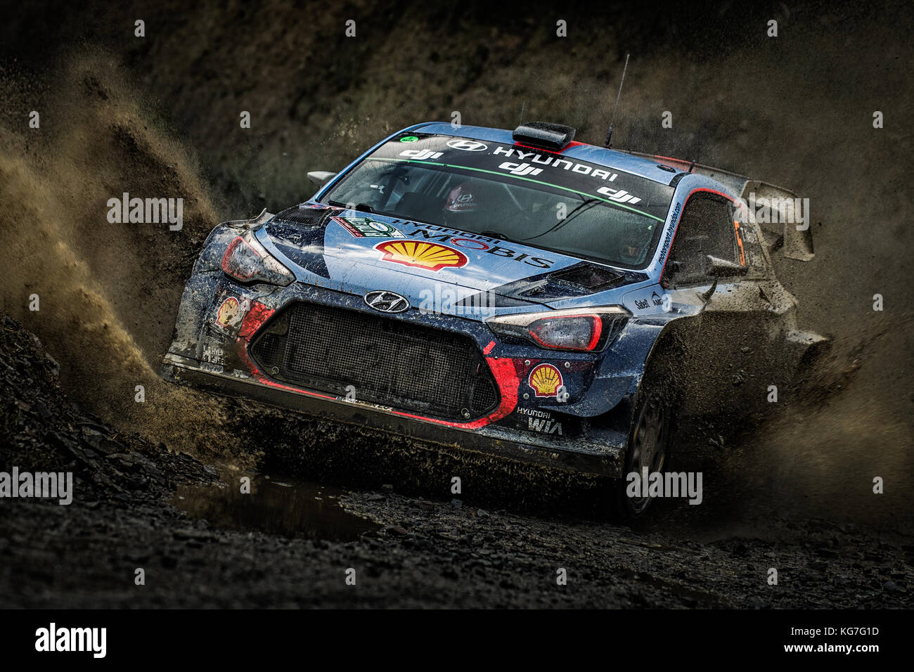 Thierry Neuville Rallyes in der WRC World Rally Championship Tag versichern Wales Rally GB 2017 Stockbild