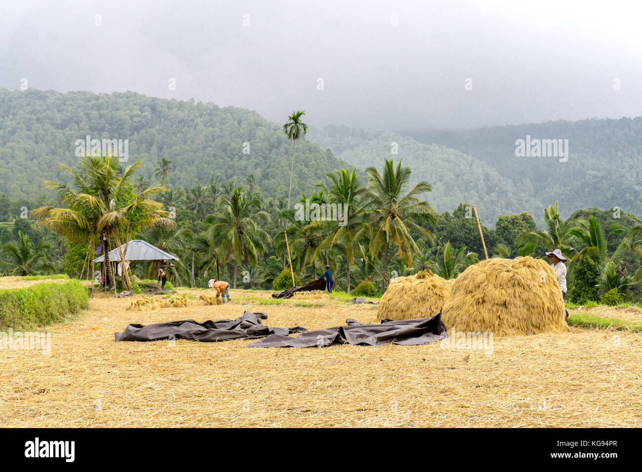 Indonesia bali farmer stockfotos indonesia bali farmer for Traditionelles haus bali