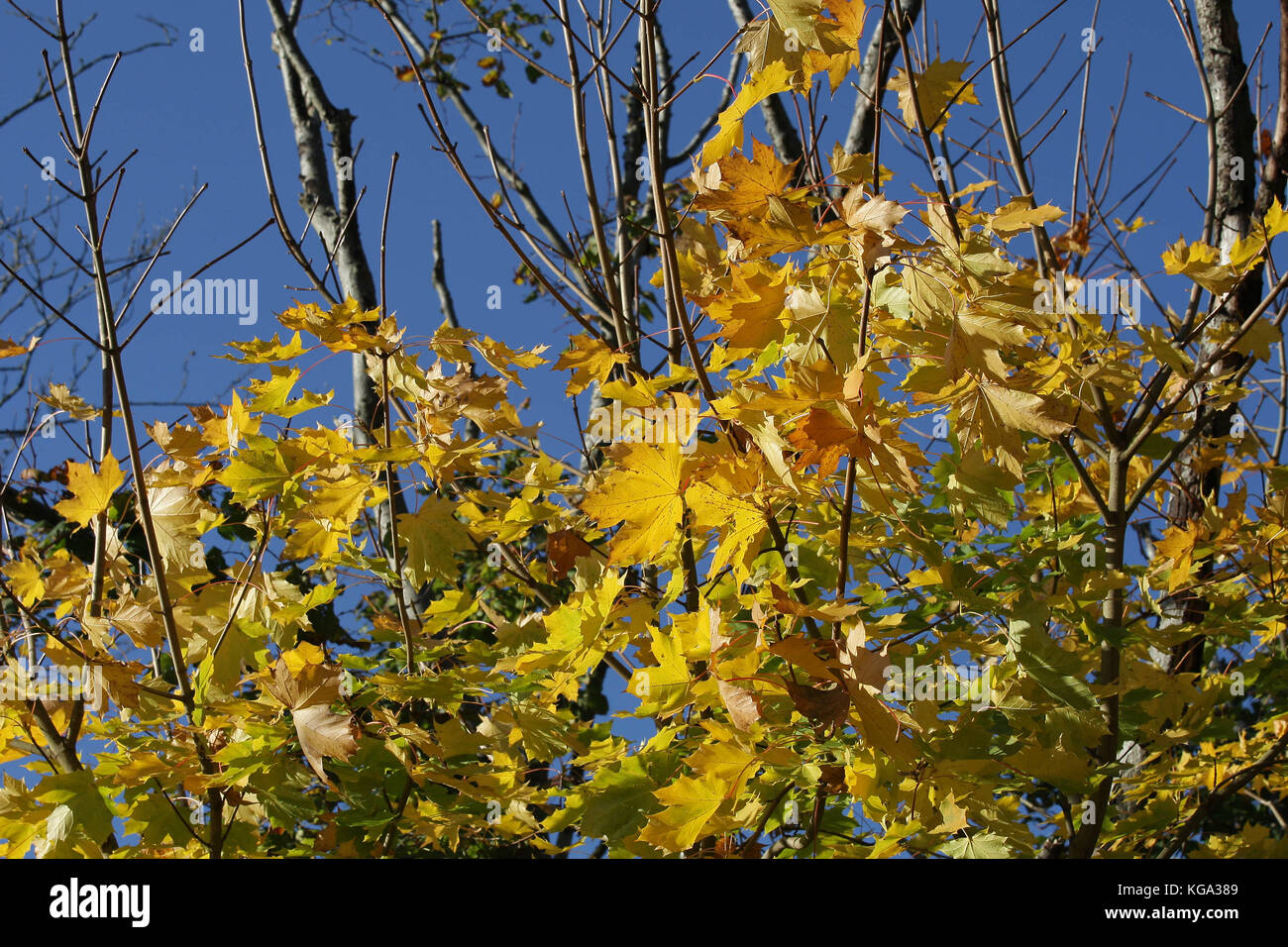 Der Herbst in Merseyside Stockfoto