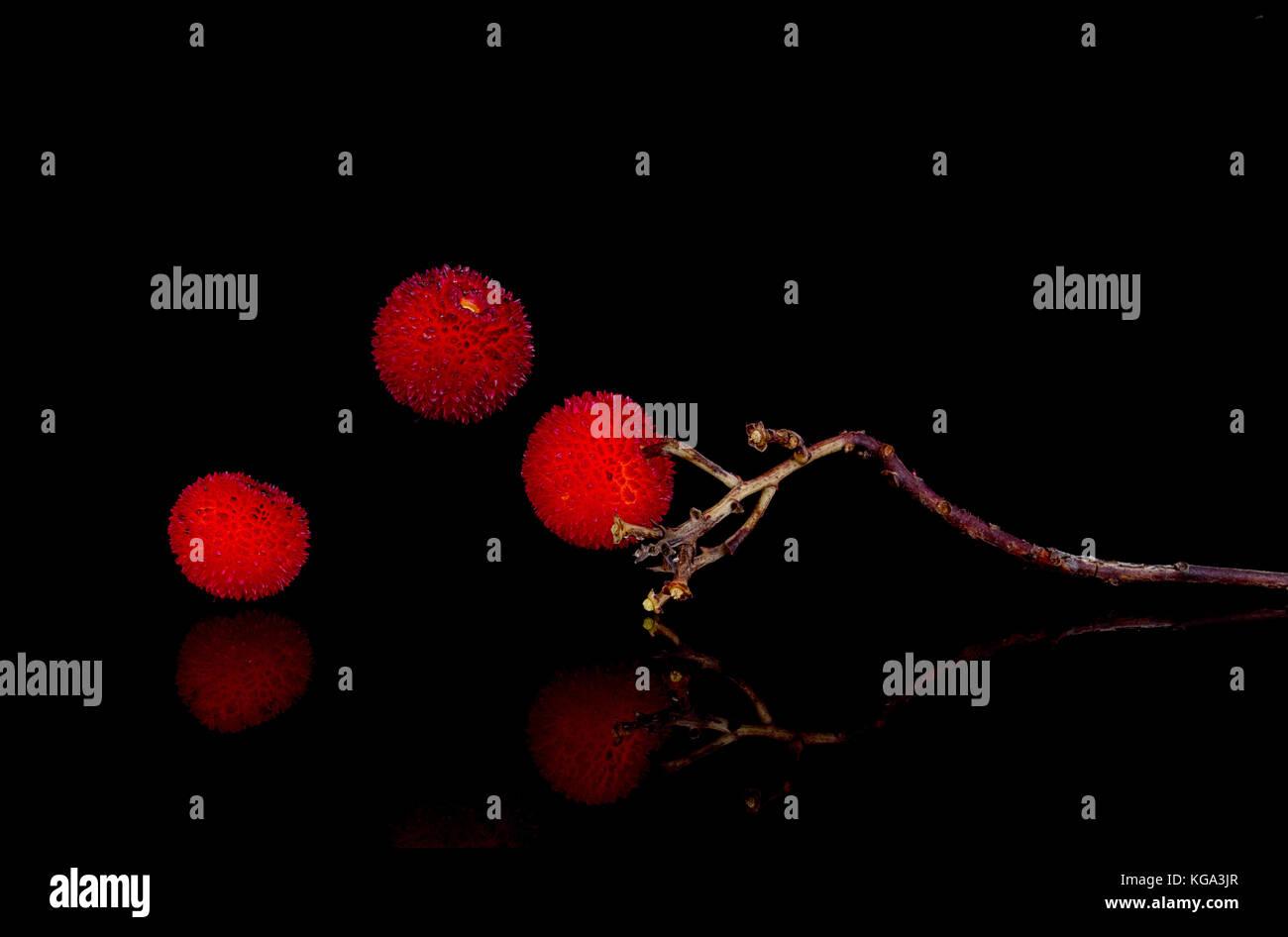 Früchte der Erdbeerbaum. Arbutus unedo. bizarre natürliche Form. Stockbild
