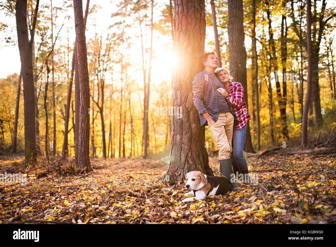 Älteres Ehepaar mit Hund auf einem Spaziergang im Wald. Stockbild