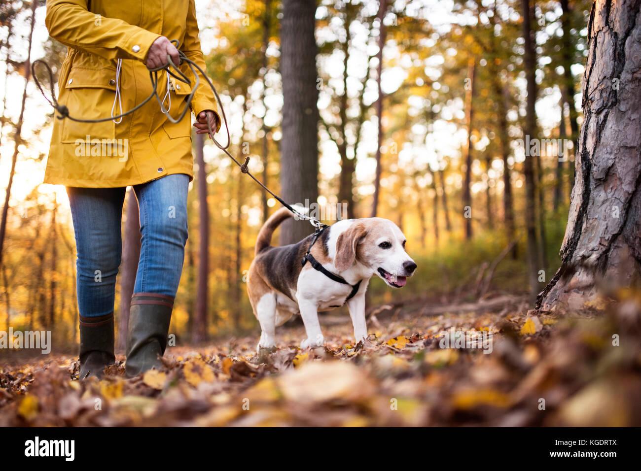Ältere Frau mit Hund auf einem Spaziergang im Wald. Stockfoto