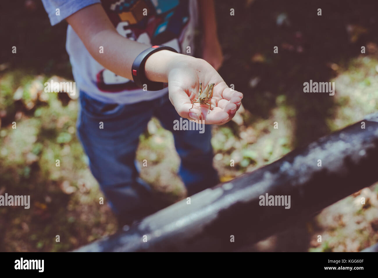 Ein Kind hält eine Heuschrecke in Ihrer Hand Stockbild