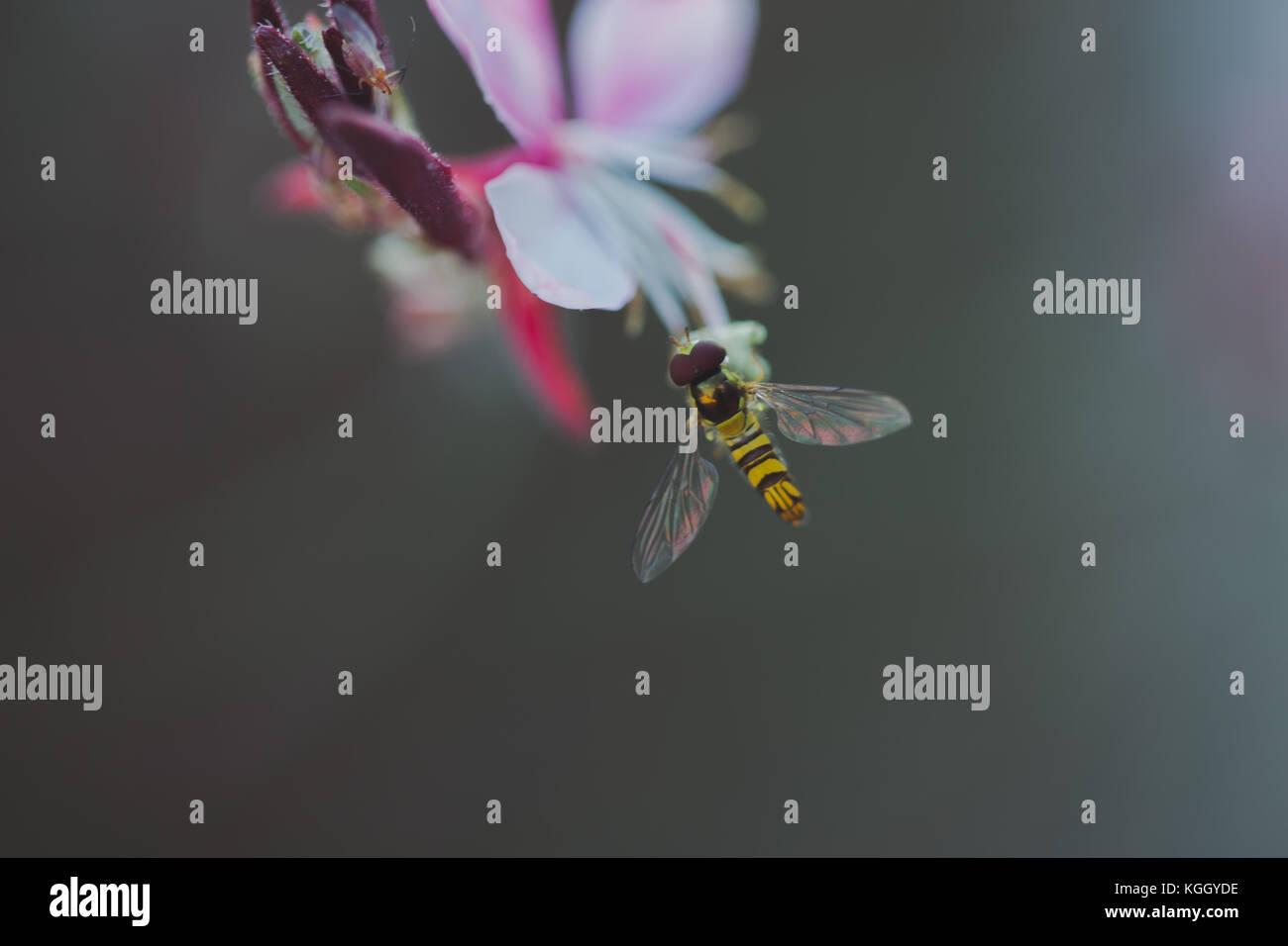 Biene auf bunte Blume Stockbild