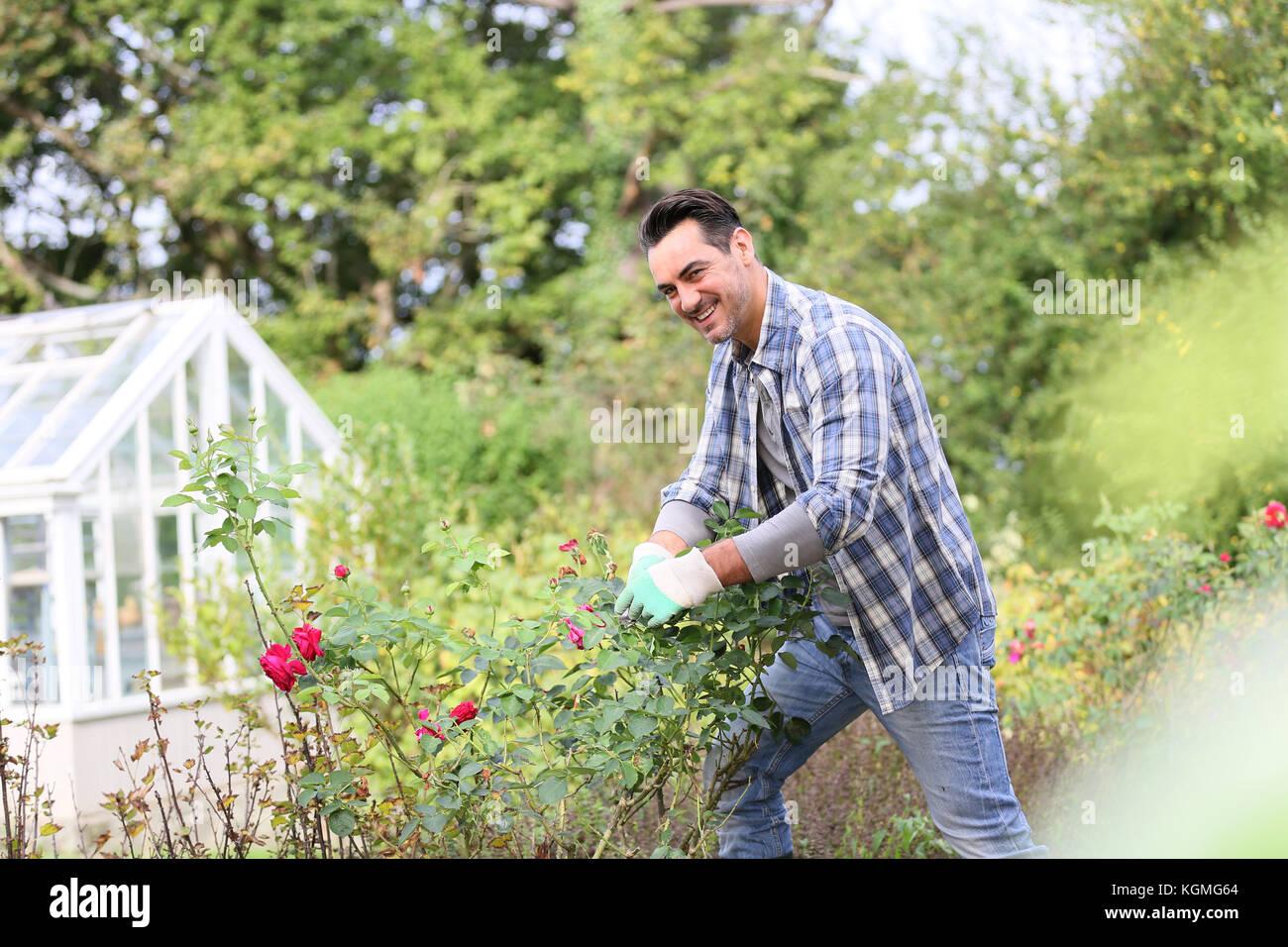 Mann im Botanischen Garten schneiden Rosen Stockbild