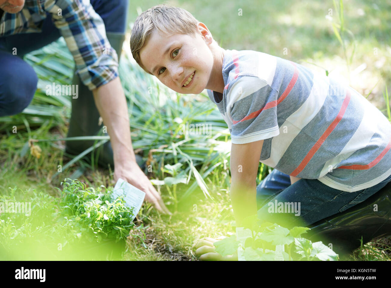 Vater Sohn Lehre, wie sie in pflanzlichen Garten Pflanzen Stockbild