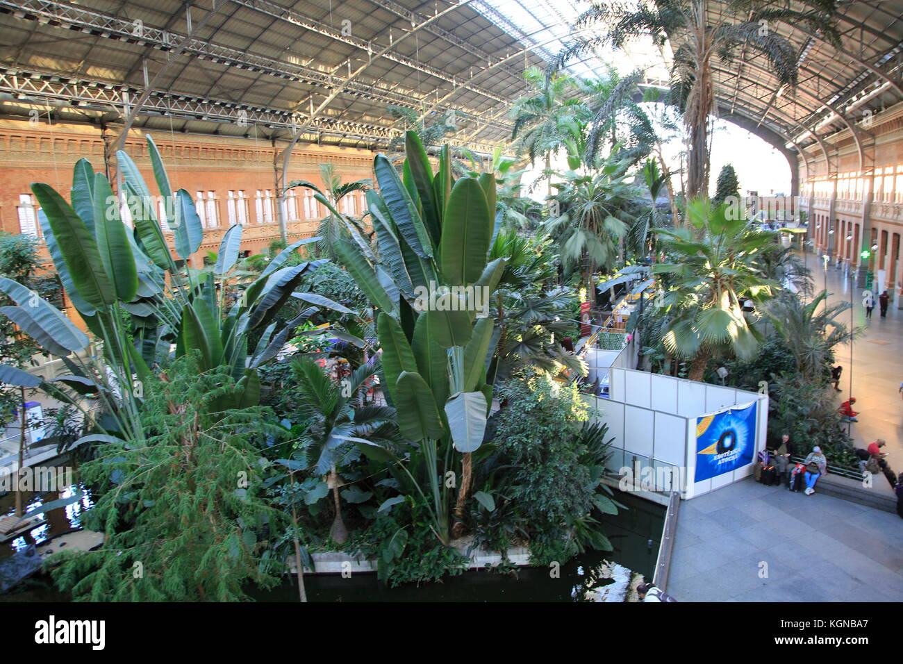 Tropische Pflanzen wachsen im Garten innerhalb der Bahnhof Atocha ...