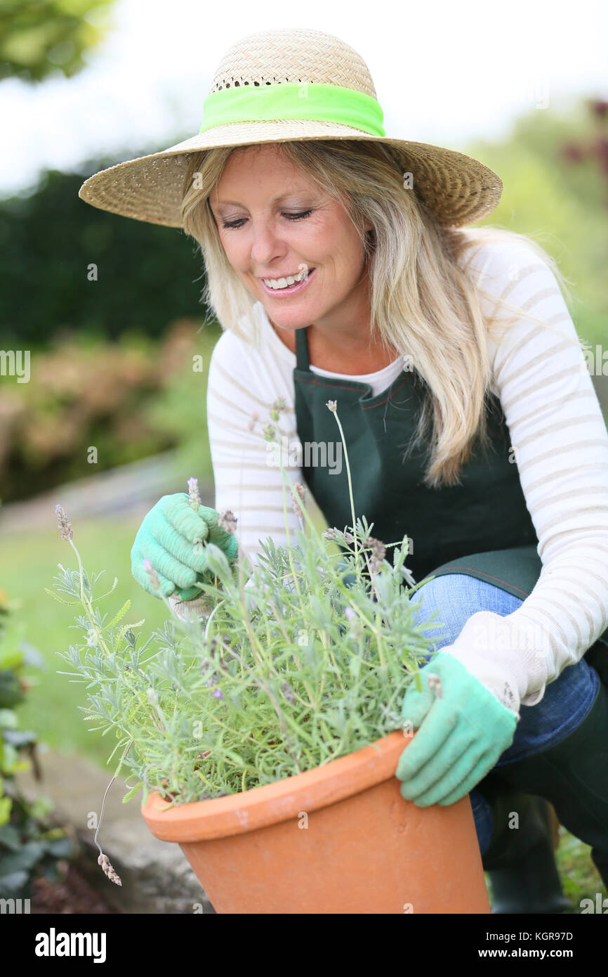 Porträt der schönen Frau gradening aromatische Pflanzen Stockbild