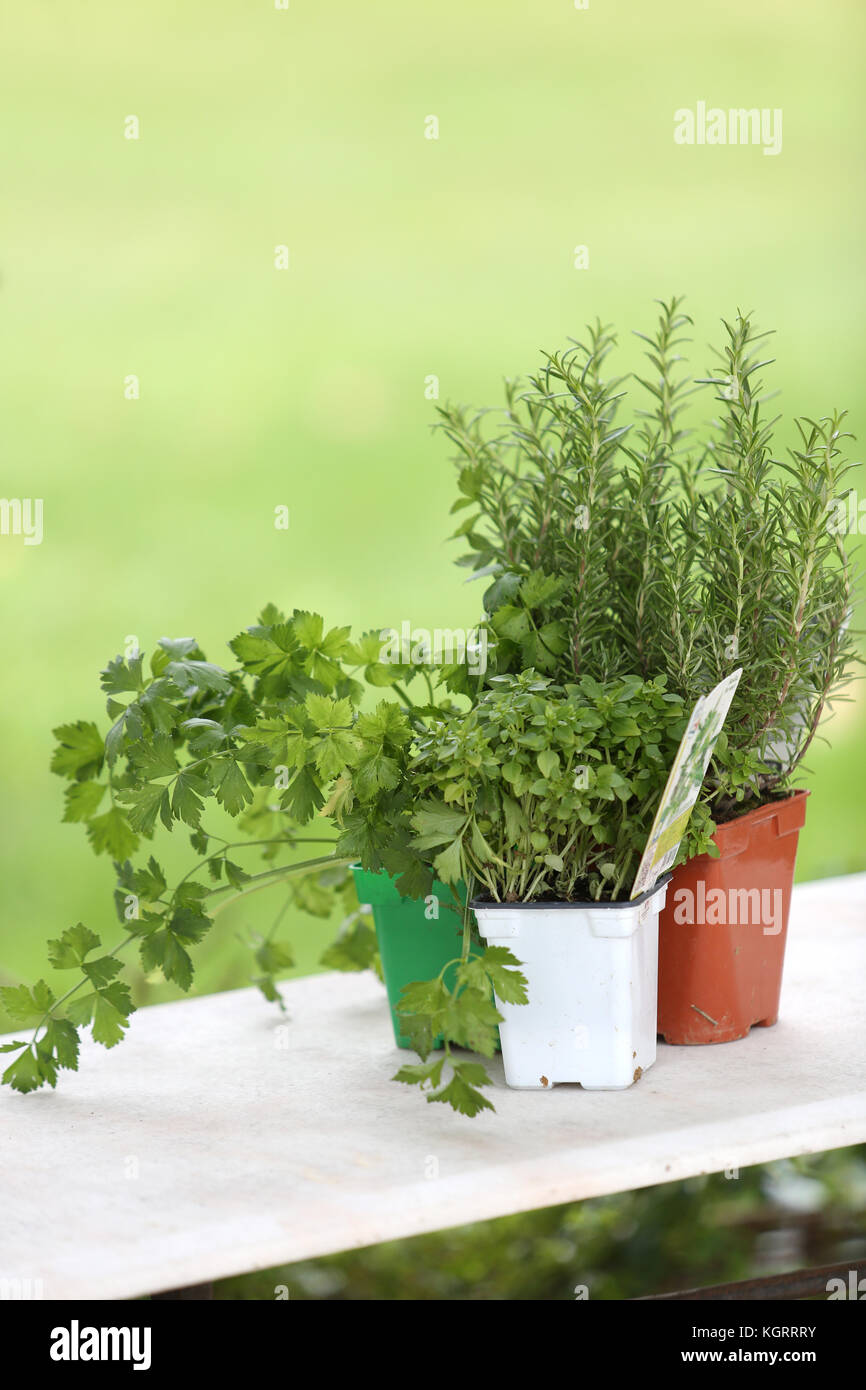 Aromatische Pflanzen auf Tisch legen Stockbild