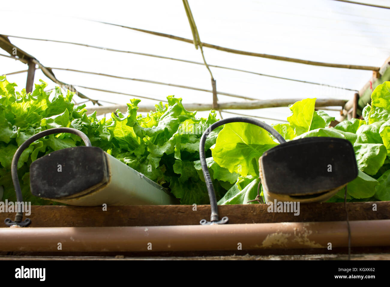 aquaponic stockfotos aquaponic bilder alamy. Black Bedroom Furniture Sets. Home Design Ideas