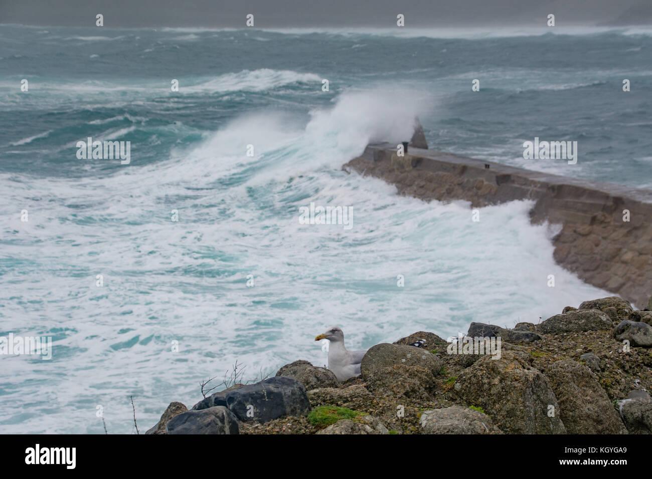 Sennen Cove, Cornwall, UK. 11 Nov, 2017. de Wetter. Starker Wind nähern 50 mph und Wellen schlagen der North Stockbild