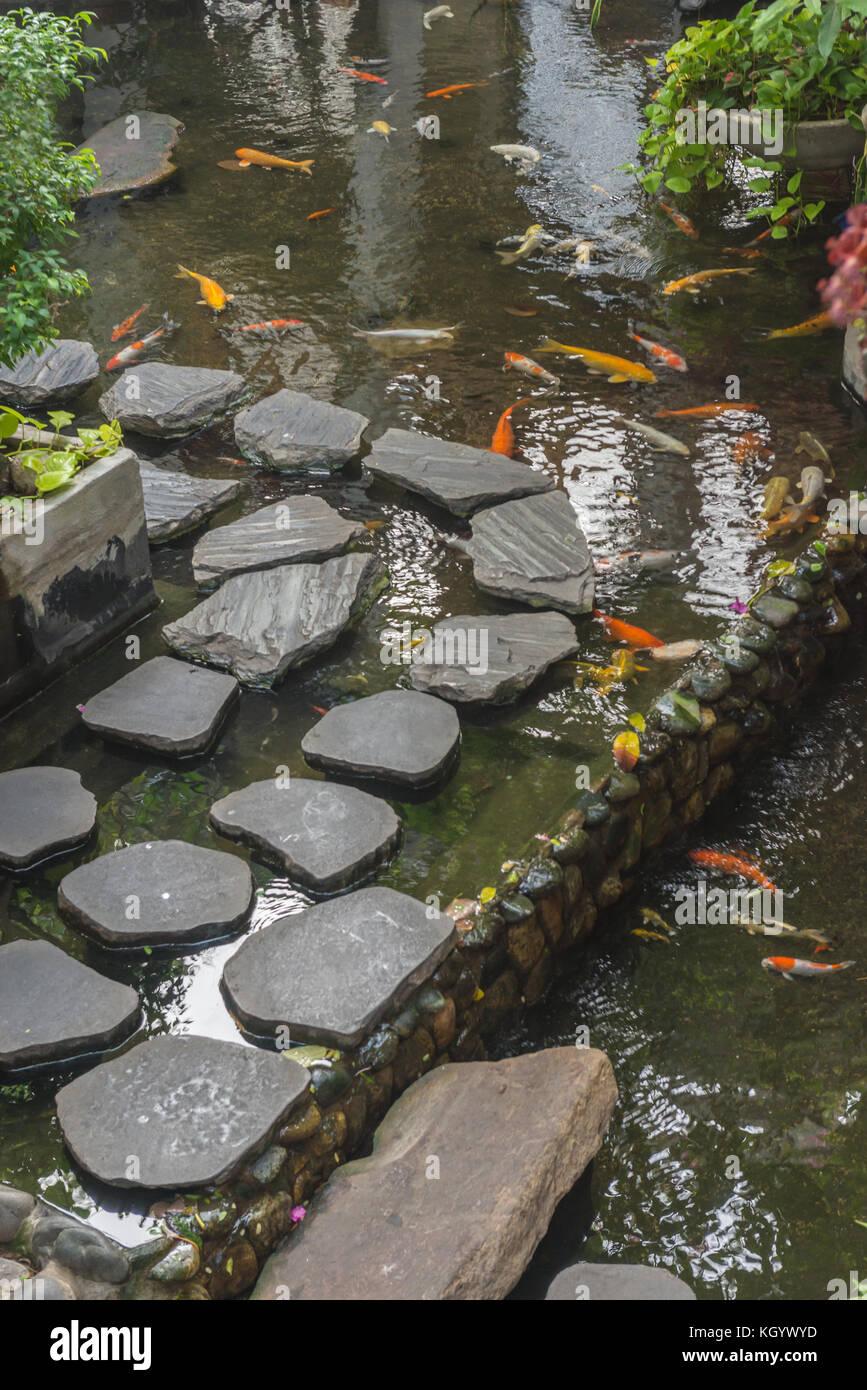 Pond fish rock stockfotos pond fish rock bilder alamy for Japanische zierfische