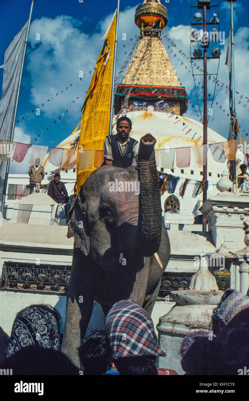 Mann auf Elefanten Stockbild