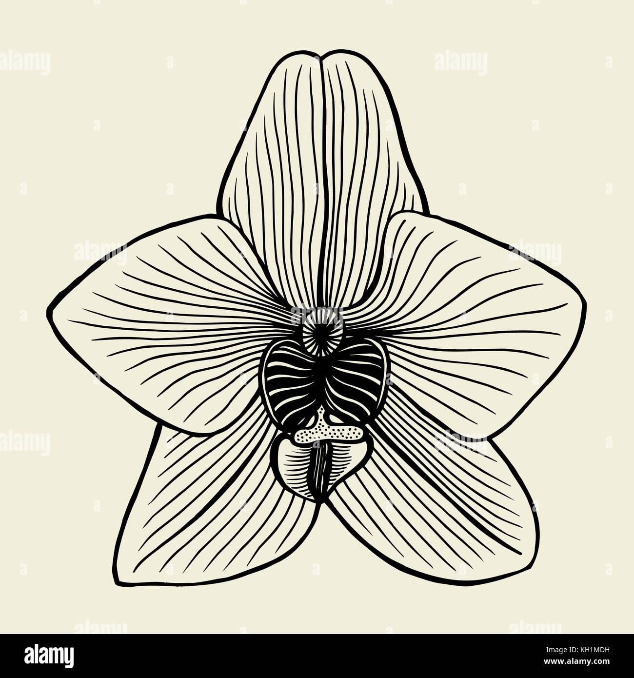 Unglaublich Orchideen Tattoo Referenz Von In Einem Grafischen Stil Punkte Und Linien