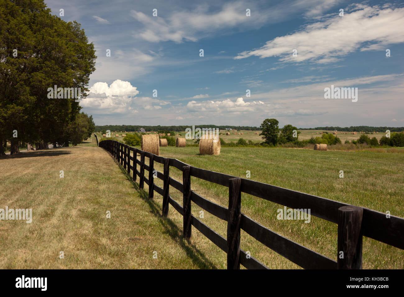 Strohballen auf einem Feld von Grün mit blauem Himmel Stockbild
