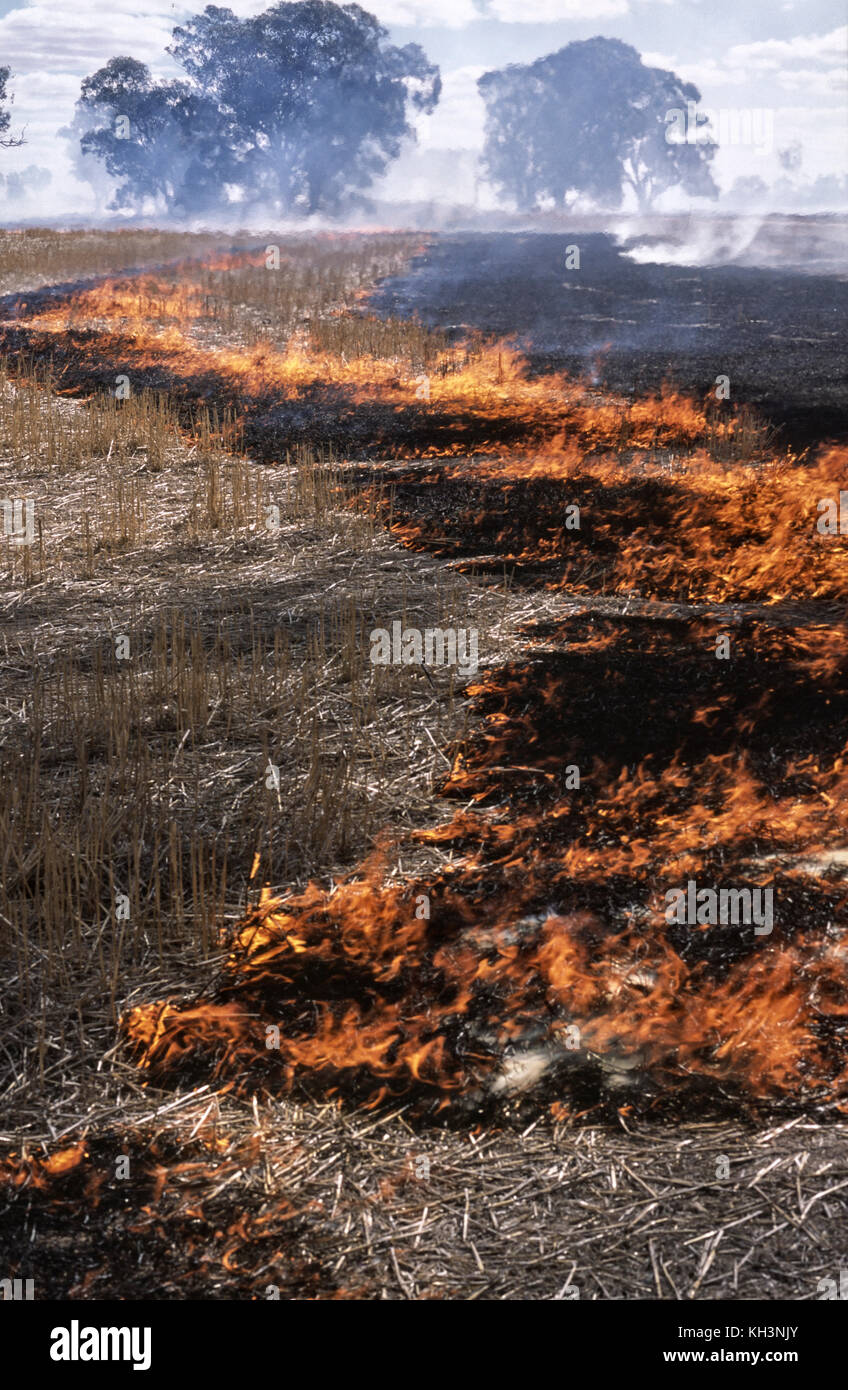 Getreide Stroh brennen Stockbild