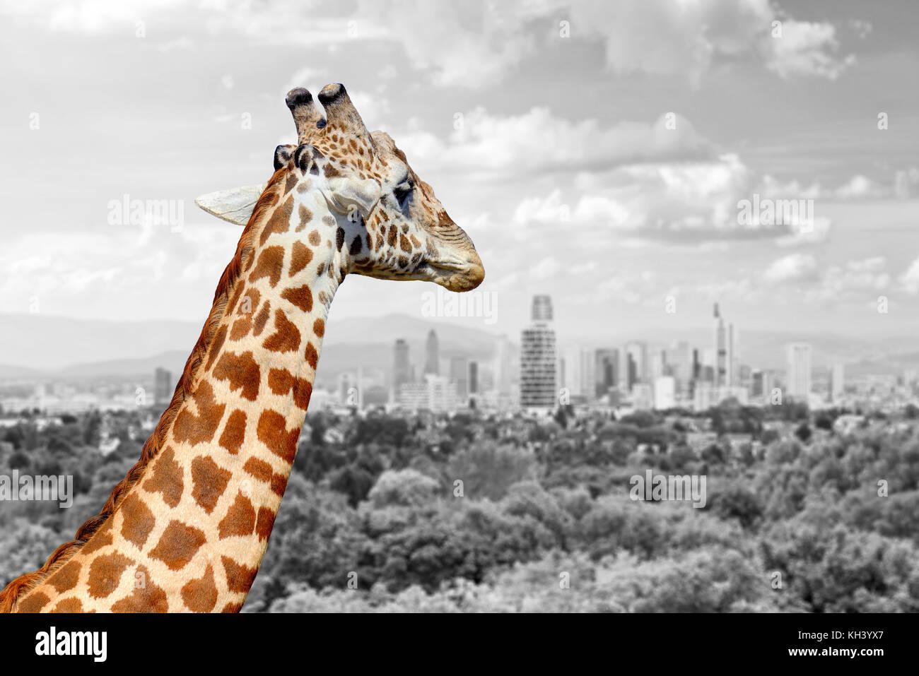 Wunderbar Giraffe Farbung Seite Galerie - Druckbare Malvorlagen ...