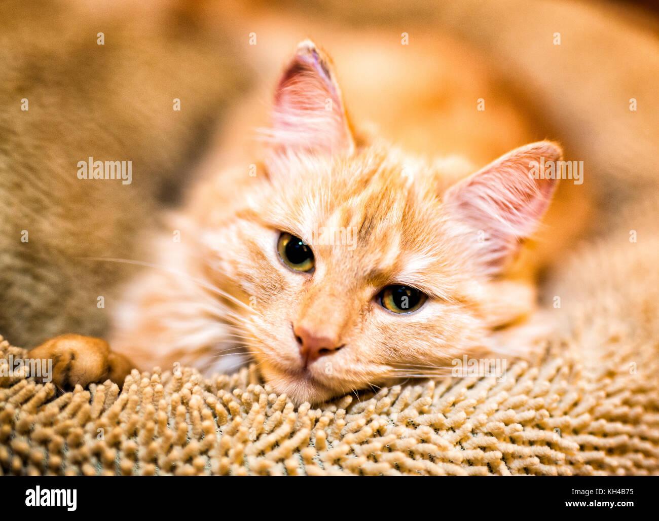süße katzen hunde pferde und esel stockfoto bild