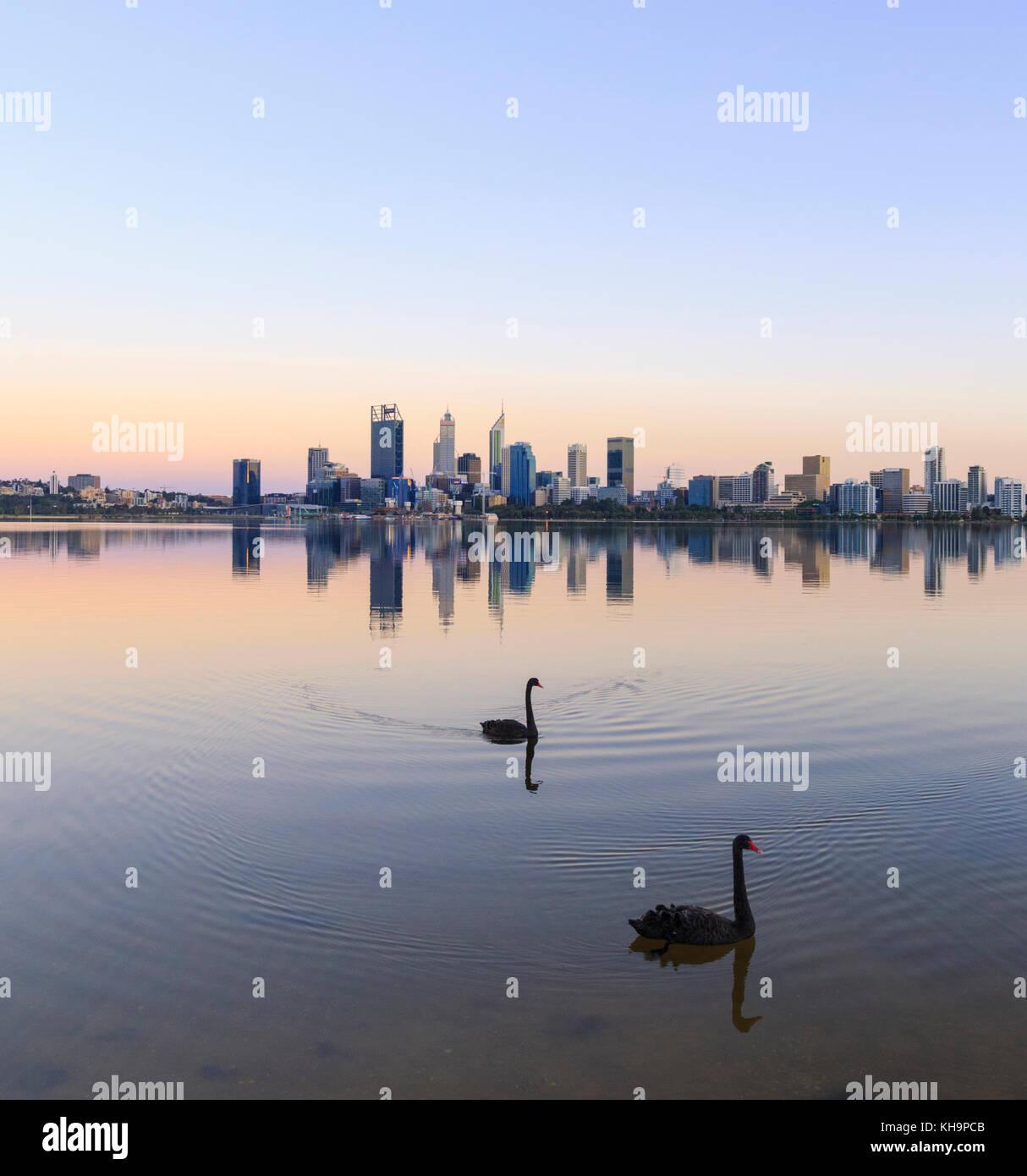 Zwei schwarze Schwäne auf dem Swan River bei Sonnenaufgang. Stockbild