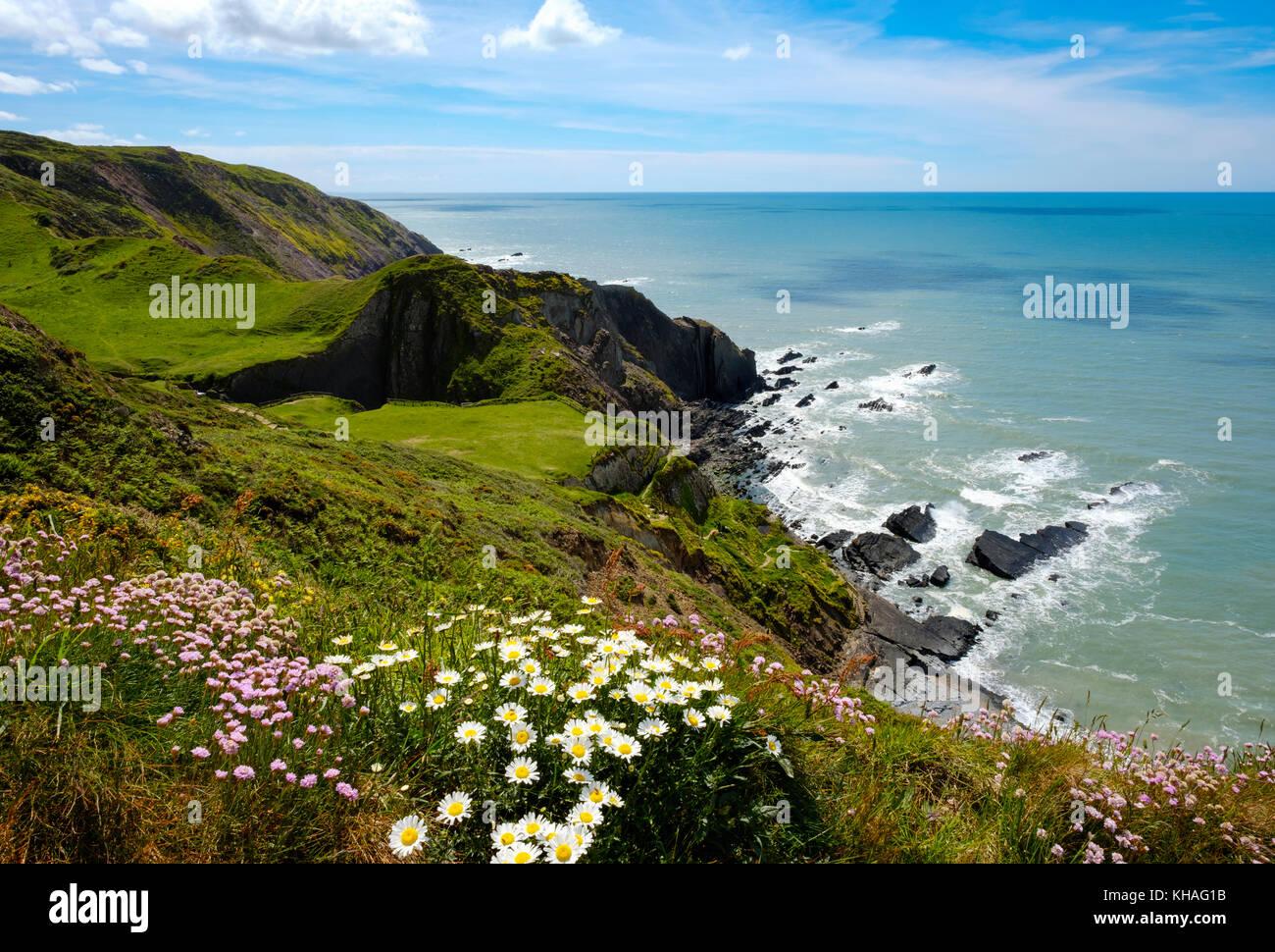 Steilküsten, Hartland Quay, Hartland, Devon, England, Großbritannien Stockbild