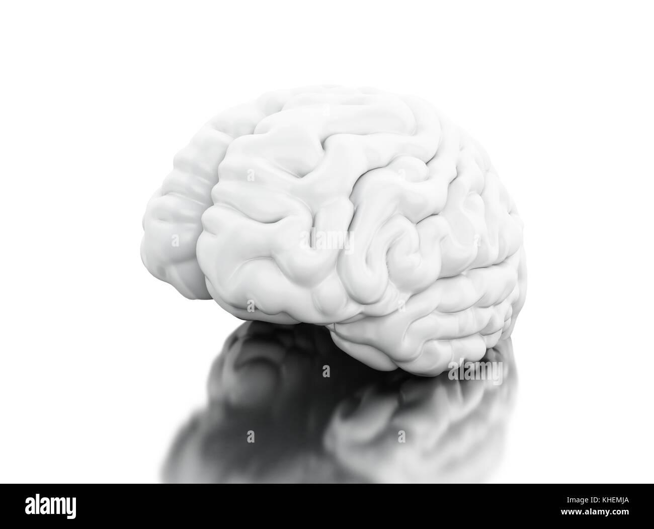 Ungewöhnlich 3d Anatomie Des Gehirns Galerie - Anatomie Von ...
