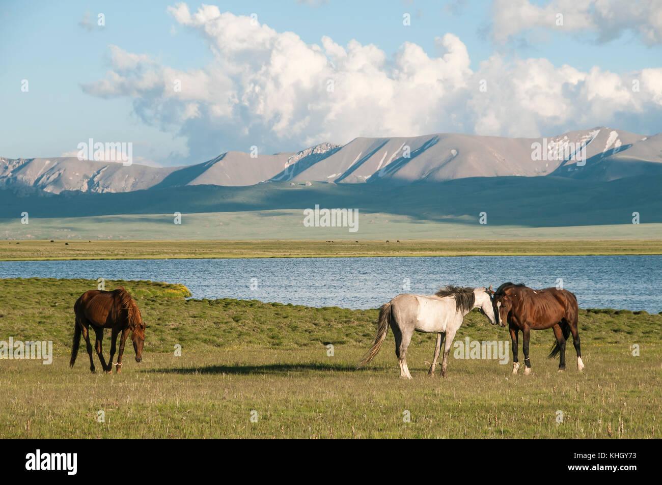 Atemberaubend Pferde auf dem Hintergrund der Berge und der Song kol See &YQ_89