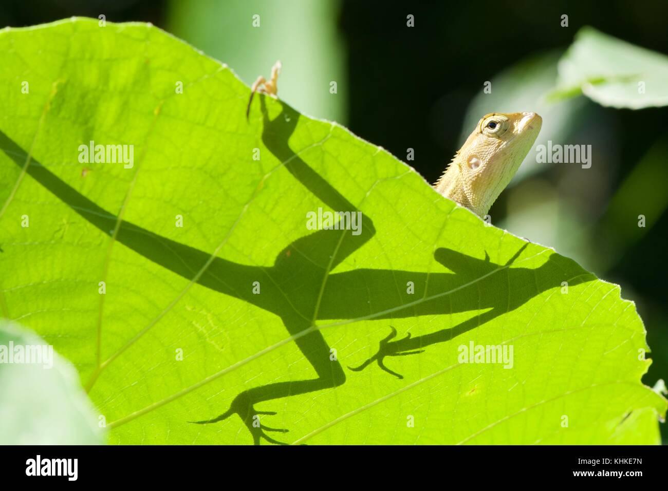 Fein Basilisk Eidechse Färbung Seite Fotos - Entry Level Resume ...
