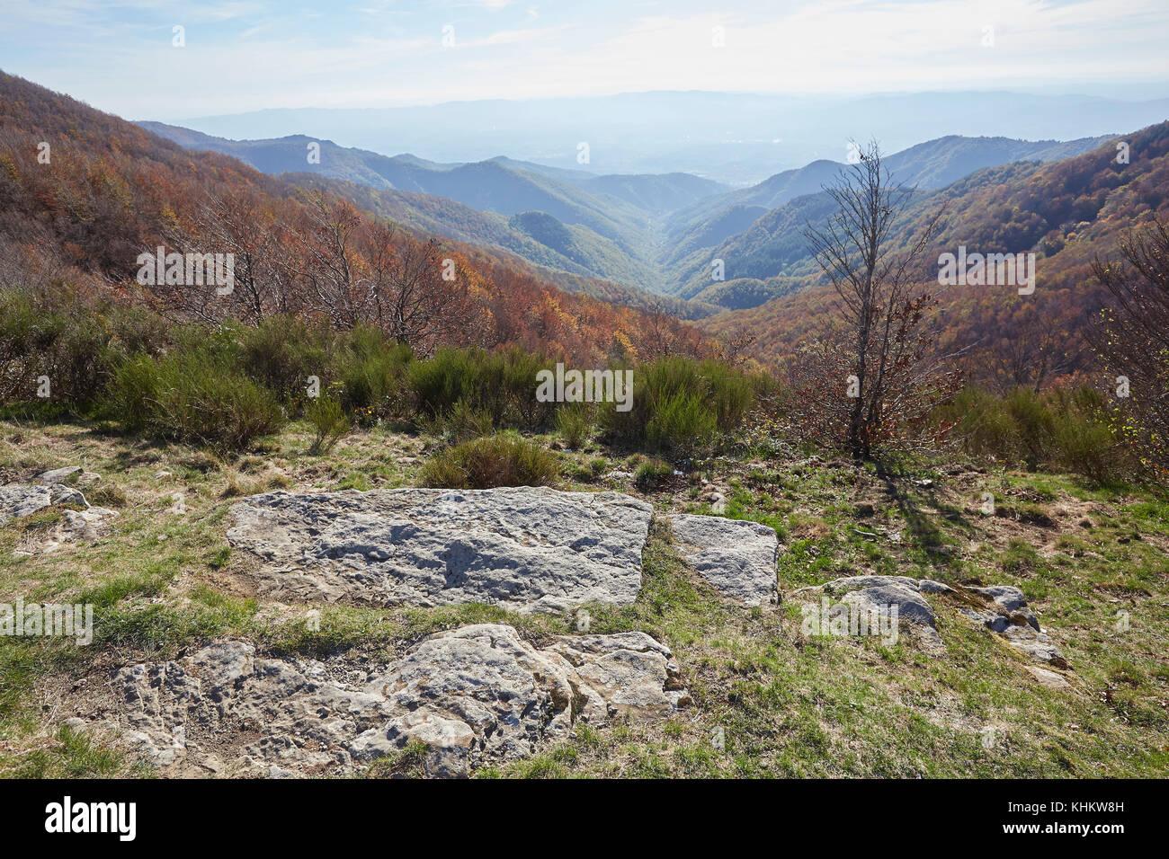 "Bunte Herbst Buche, Fagus sylvatica, in ""Foresta di Sant'Antonio', die Berge des Pratomagno, Valdarno, Stockbild"