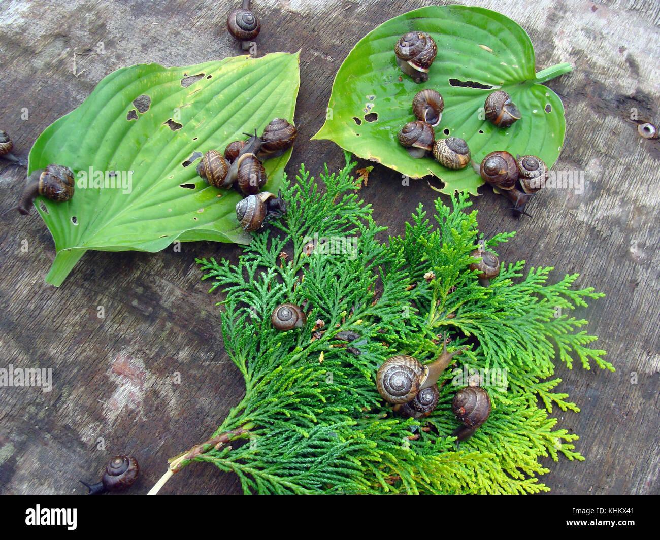 Viele Kleine Garten Schnecken Essen Blumen Und Pflanzen Blätter