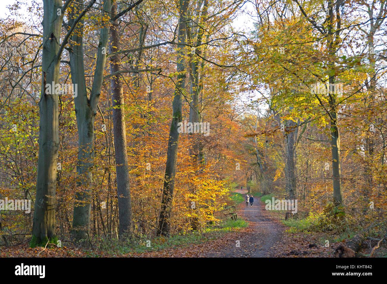Wald im Herbst, Lüneburg, Niedersachsen, Deutschland Stockbild
