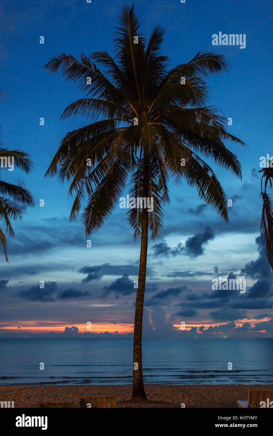 Palm Tree Silhouette in den Sonnenuntergang, Thailand Stockbild