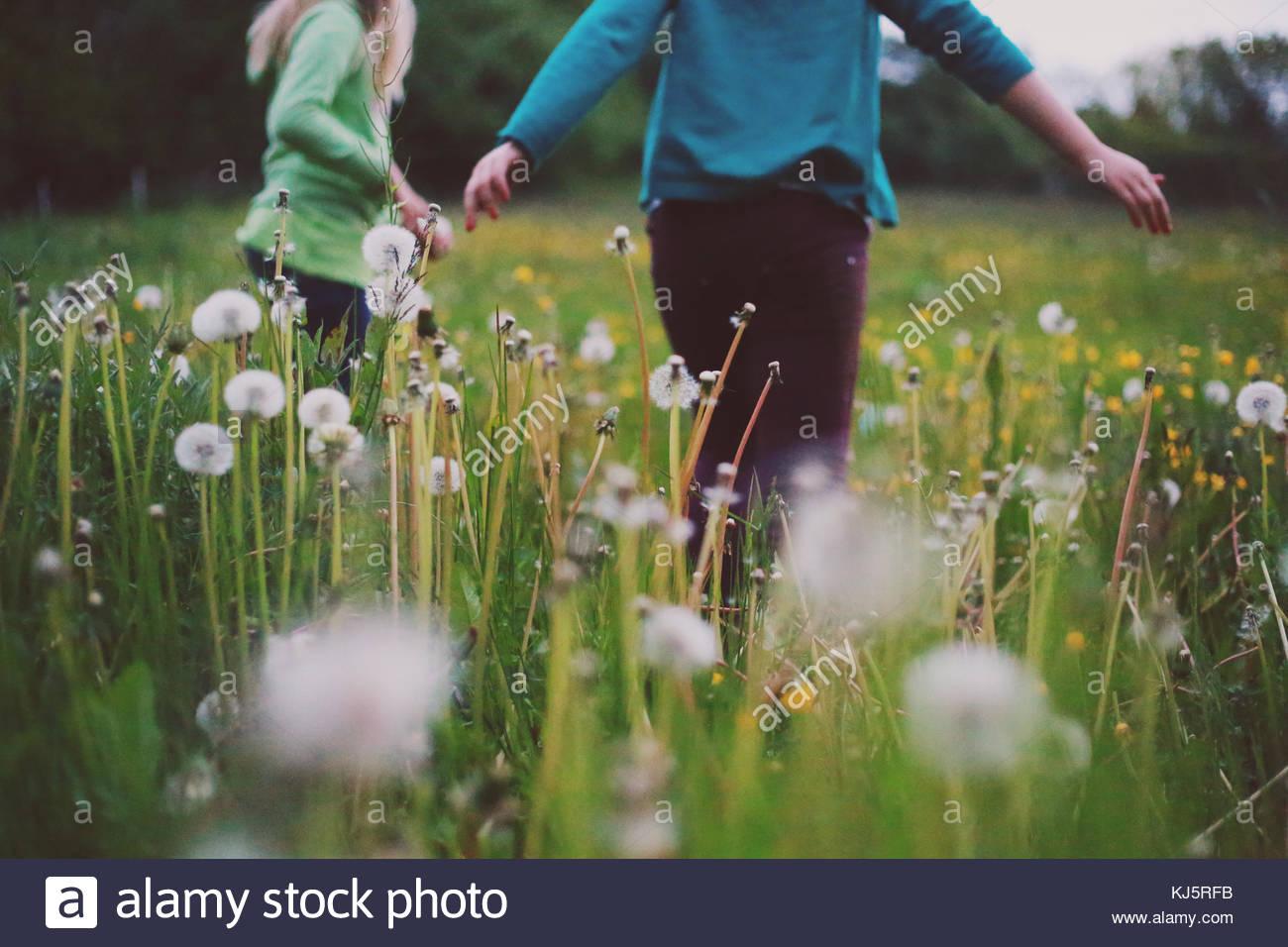 Kinder in einem Feld mit Löwenzahn Stockbild