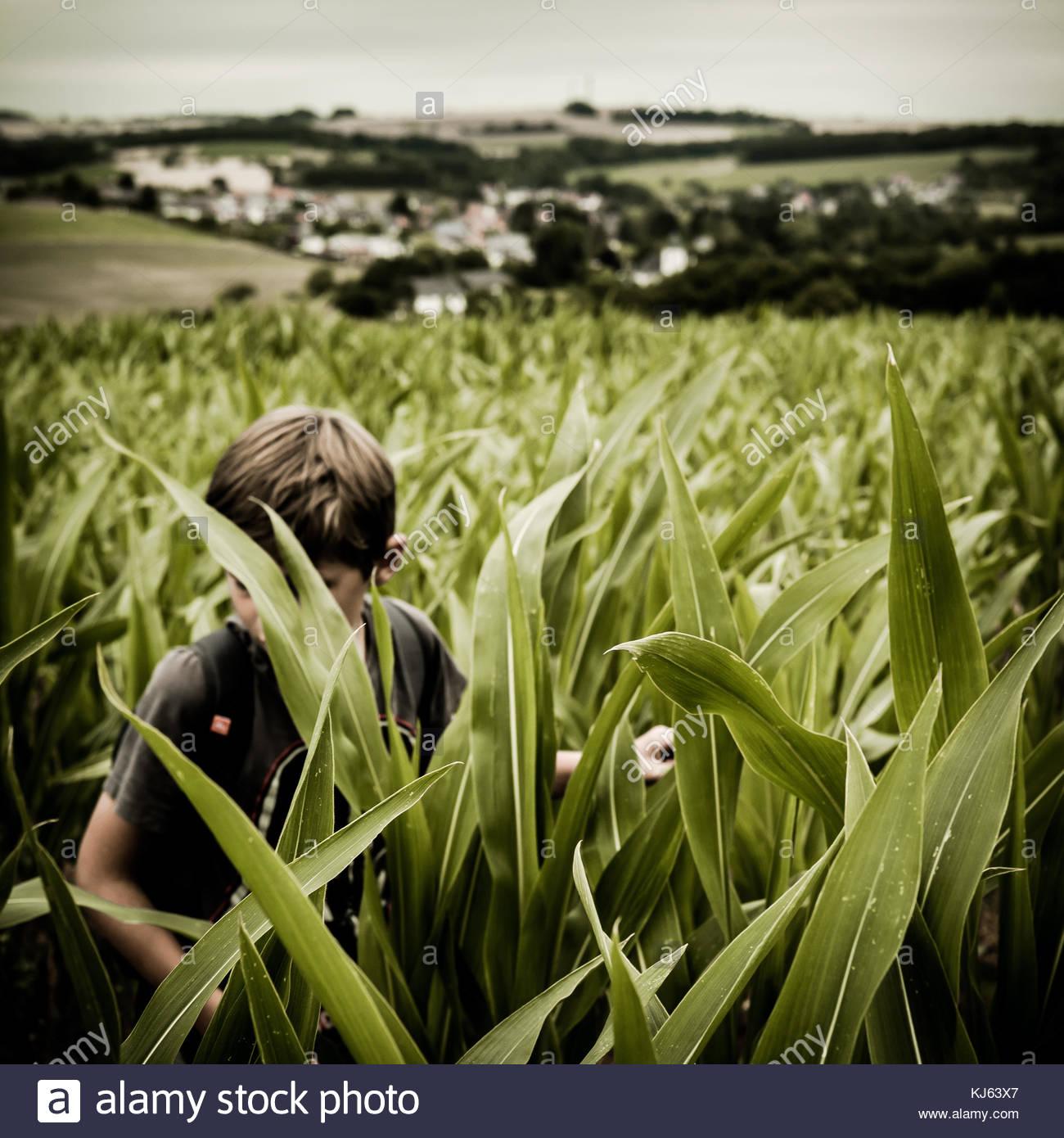 Junge im Kornfeld Stockbild